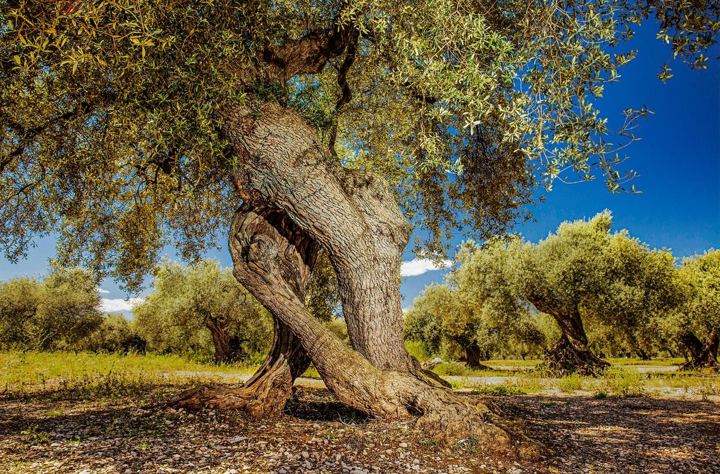 oliveres_02-min