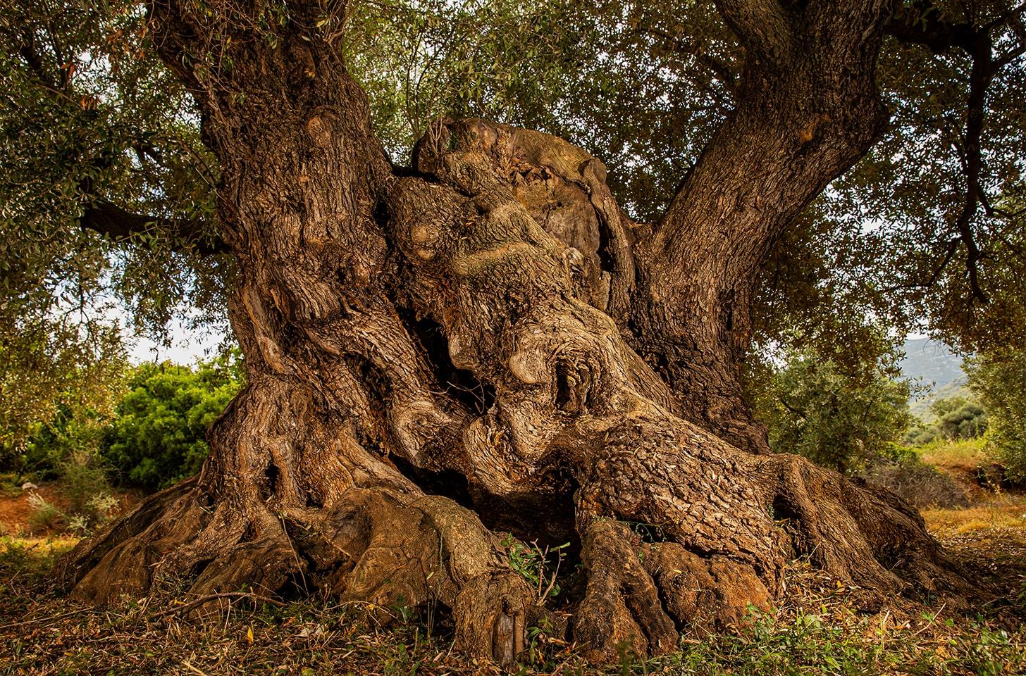 oliveres_06-min