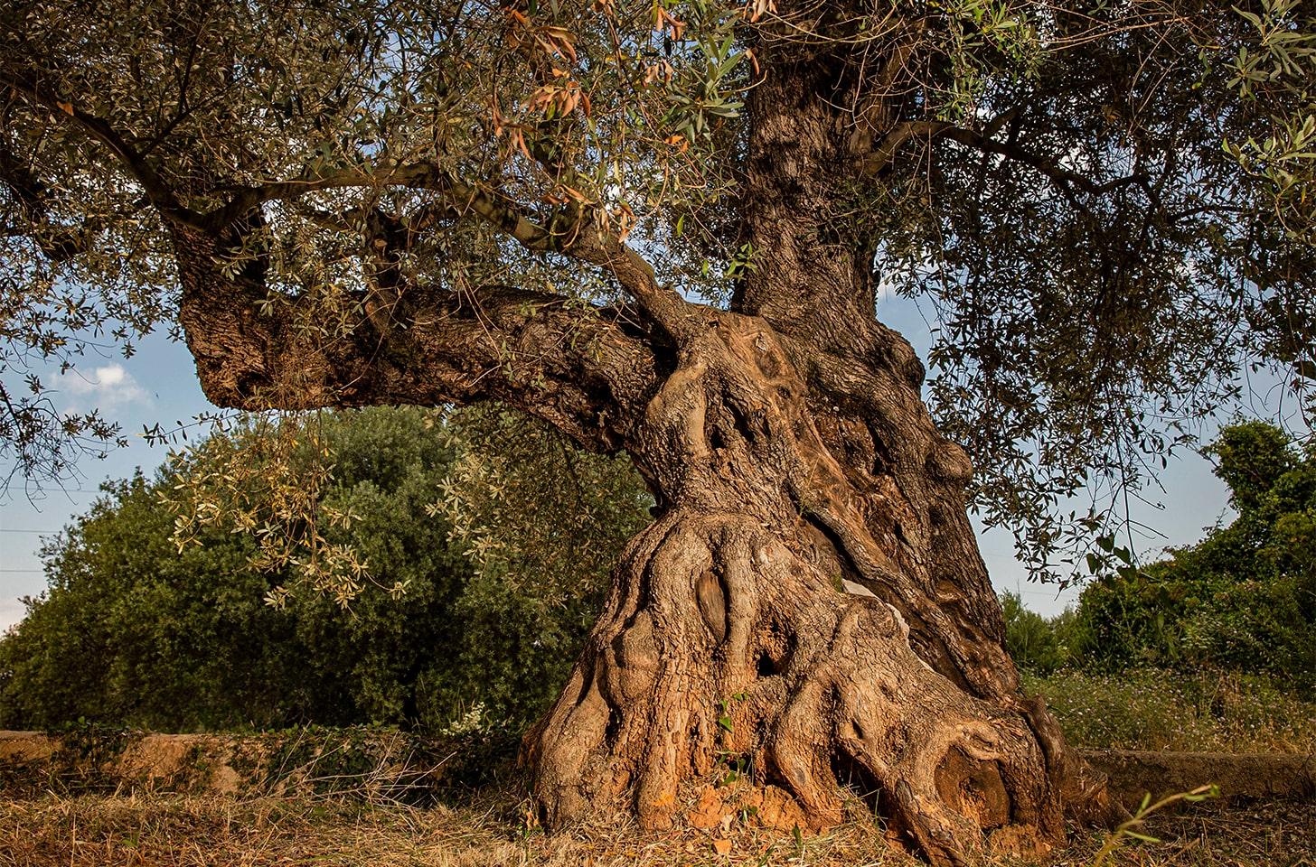 oliveres_07-min